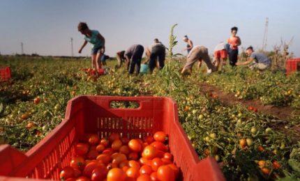 Agricoltura: il 'caporalato esiste anche nel Centro Nord Italia! Una soluzione possibile