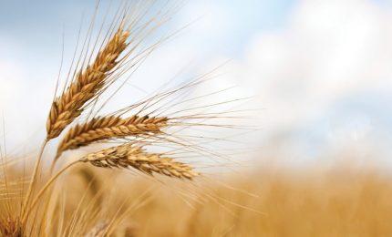 Attenzione alle nuove pandemie: perché è importante che la Sicilia sostenga la propria agricoltura/ MATTINALE 501