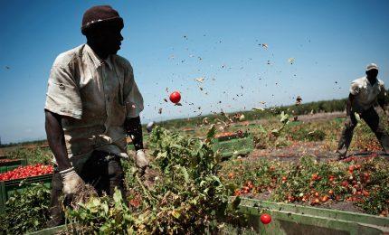 Agricoltura ed emergenza Coronavirus: non ci sono più i braccianti agricoli per raccogliere l'ortofrutta nei campi...