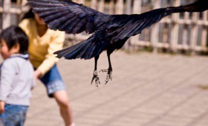 Nichelino (Torino): uno stormo di corvi attacca i passanti. Legame con il 5G?