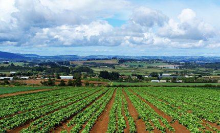 Terra è Vita a Musumeci e Miccichè: l'assessorato all'Agricoltura funziona, cambiare sarebbe un errore