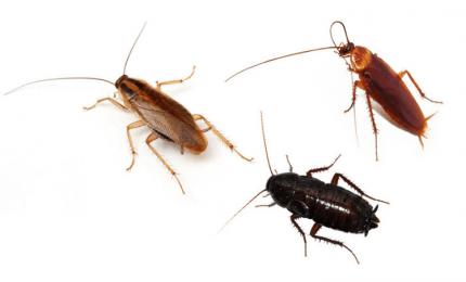Palermo, scarafaggi sui mezzi di trasporto pubblico! E meno male che sono sanificati...