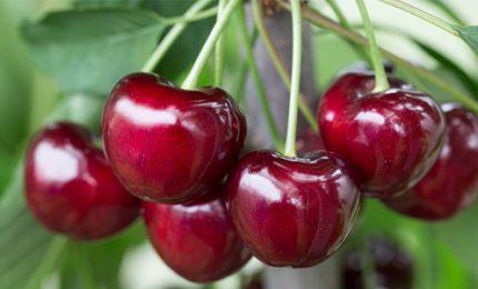 Le produzioni siciliane di qualità? All'estero. E i siciliani mangiano prodotti agricoli esteri!/ MATTINALE 459