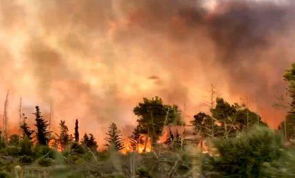Dopo che mezza Sicilia è andata a fuoco il Governo Musumeci dà il via alla stagione antincendio