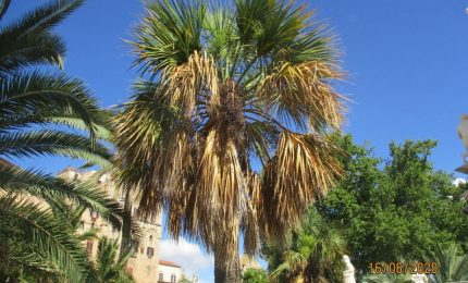Palermo, il Palmeto di Villa Bonanno in totale abbandono!