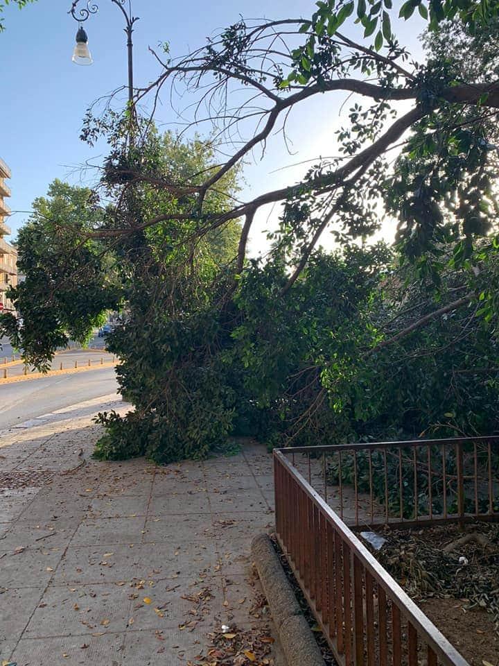 PALERMO-CITTA' 24/ Olé: crolla l'albero di corso Tukory, altra 'perla' del Comune…
