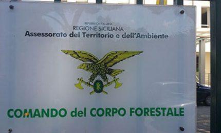 Ma lo sanno che i forestali non hanno nulla a che vedere con il Corpo Forestale della Regione?