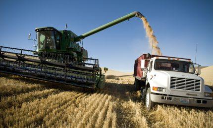 Calo della produzione di grano nel mondo. Sicilia: sbagliato vendere il grano duro ora