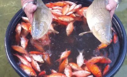 Una città allo sbando/ A Palermo non si salvano nemmeno i pesci di Villa Sperlinga