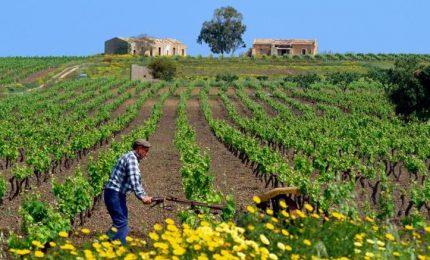"""Via al sostegno del """"vigneto Sicilia"""", la Regione punta sulla qualità dei vini siciliani"""