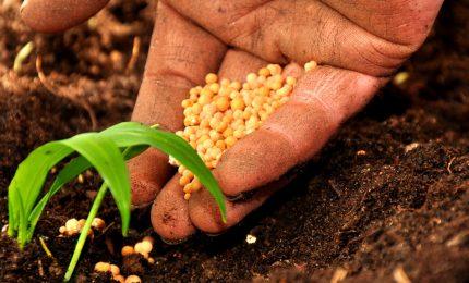 Agricoltura: nasce un'alternativa 'dal basso' a Coldiretti, CIA, Confagricoltura e Copagri