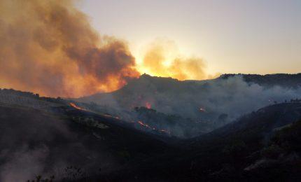 E se dietro i continui incendi in Sicilia ci fosse una strategia terroristica?