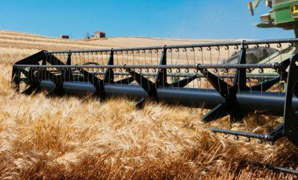 Il prezzo del grano duro va giù? Colpa di un algoritmo. Chi c'è dietro?