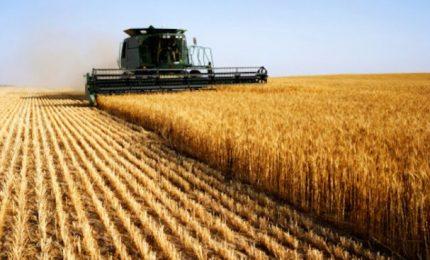 Il grano duro, i prezzi, la produzione mondiale in discesa, il glifosato e la battaglia sulla CUN in corso/ SERALE