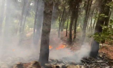 Per ridurre gli incendi in Sicilia vanno assunti gli operai della Forestale per farli lavorare tutto l'anno/ MATTINALE 528
