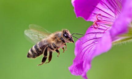 Una sentenza della Corte di Giustizia europea può salvare le api e aiutarci a eliminare il glifosato dalle nostre vite!