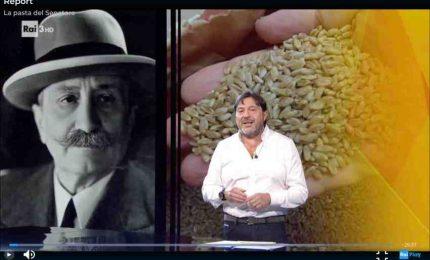 Da dimenticare la puntata che 'Report' ha dedicato al grano Senatore Cappelli!/ SERALE