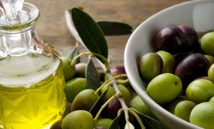 """Movimento Terra è Vita: """"Come si può vendere una bottiglia di olio d'oliva extra vergine a 2,70 euro al litro?"""""""