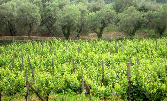 """Aziende agricole siciliane ecosostenibili, Corrao: """"Deve intervenire la Regione"""""""