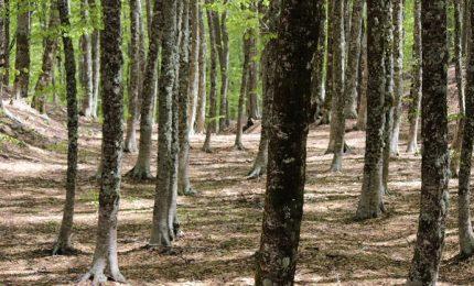 """Forestali: la proposta del Governo Musumeci? Una """"ciofeca"""". Il SIFUS pronto a scendere in piazza"""