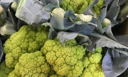 Palermo e l'emergenza Covid: crocicchi, broccoli e in ascensore senza mascherina