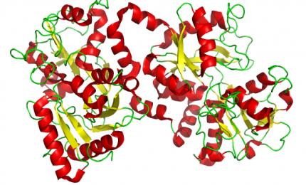 La lattoferrina è efficace nella lotta al Covid-19: blocca l'entrata del virus/ SERALE