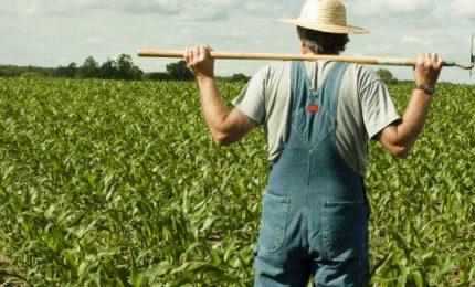 Raccolto l'appello di Terra è Vita: mozione all'Ars per bloccare il calo dei prezzi e i debiti delle aziende agricole
