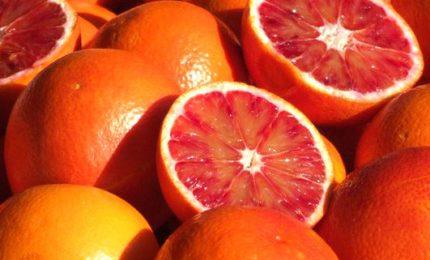 Agrumi Sicilia orientale: le arance rischiano di marcire sugli alberi. Regione e Stato le acquistino e le donino alla popolazione