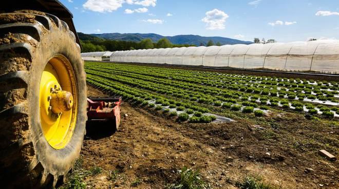 La crisi Covid travolge la ristorazione e, a cascata, gli agricoltori. Ortofrutta estera a prezzi stracciati