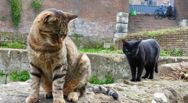 Ha investito un gatto senza prestare soccorso: automobilista denunciata