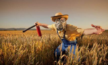 Il grande inghippo del grano canadese al glifosato. Perché i grani siciliani e del Sud sono migliori