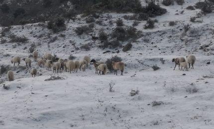 La magia dei Nebrodi, con le pecore che si muovono in mezzo alla neve! (VIDEO)