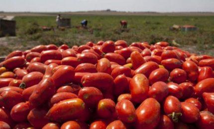 Fino a 5 mila euro ad ettaro di fondi Agea per il pomodoro da industria. Possibile??