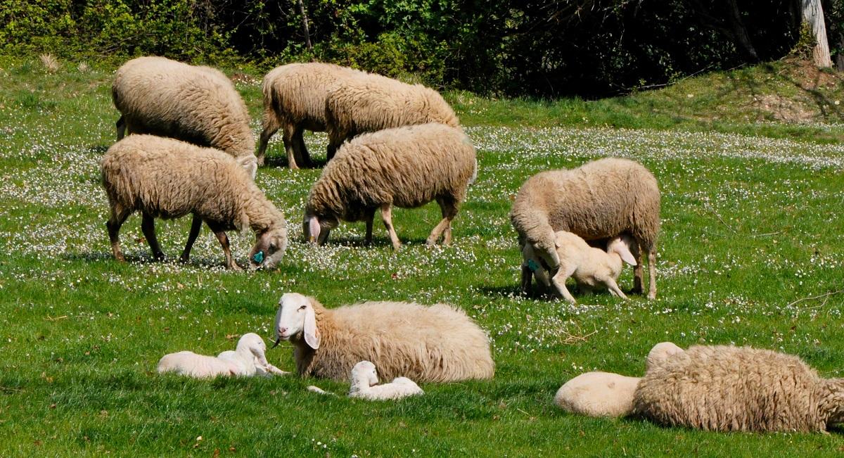 I diritti degli animali vengono prima della religione? Un tema per fare riflettere anche chi mangia carne…