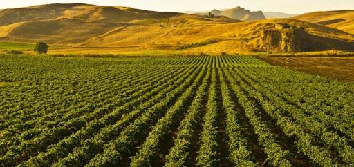 Agricoltura, pubblicata graduatoria OCM Vino-Misura Investimenti