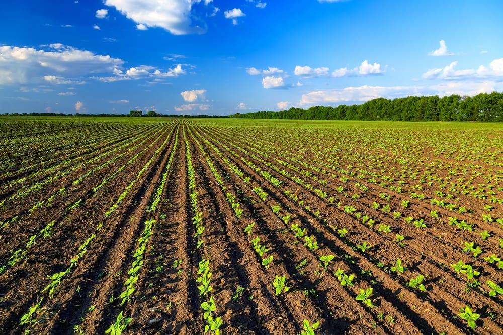 Vogliono scippare i terreni agli agricoltori siciliani per realizzare impianti fotovoltaici