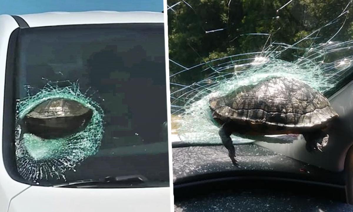 La statistica medica dell'Oms censisce anche i casi di 'tartarughe volanti' che finiscono sulle automobili in corsa…