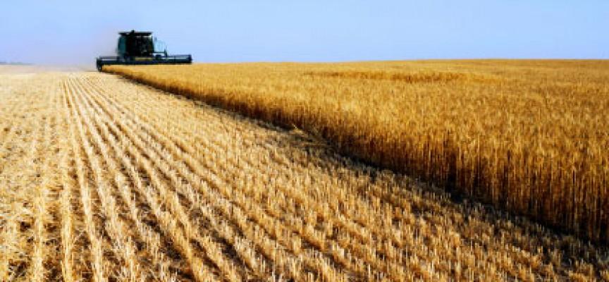 Mario Pagliaro: quest'anno il prezzo del grano duro di Sud Italia e Sicilia schizzerà all'insù perché in alcune aree del mondo il freddo ha ridotto le produzioni