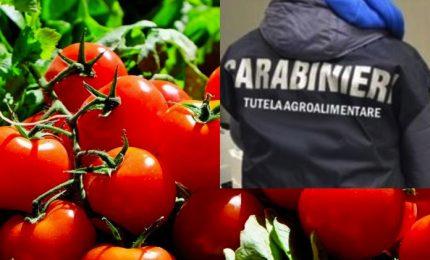 Nella patria della pizza napoletana sequestrate oltre 800 tonnellate di pomodoro egiziano contaminato da pesticidi/ MATTINALE 503