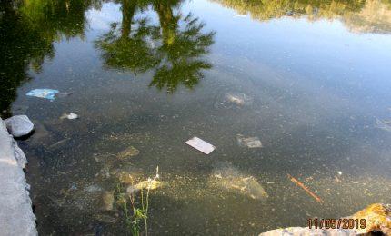 Il laghetto di Piazza Niscemi abbandonato con pesci e tartarughe che nuotano nel fango (video)/ PALERMO-CITTA' 89