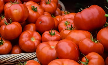 La megalopoli del pomodoro in Marocco per eliminare il pomodoro in Europa. Gli interessi delle multinazionali / MATTINALE 497
