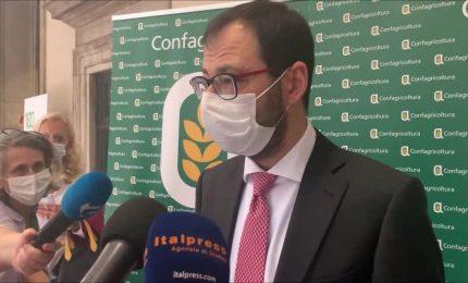 Dopo lo scippo del FEARS a Sud e Sicilia Il Ministro Patuanelli ripropone i contratti di filiera tanto cari a PD e Lega!