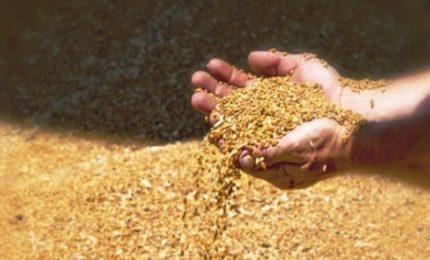 La nave carica di grano canadese avariato (presenza di umidità e insetti) dovrebbe lasciare l'Italia. Ma i controlli...