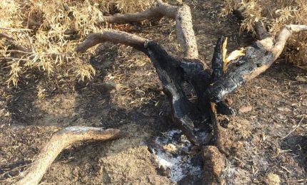 La mafia nelle campagne di Catania e dintorni: cosa c'è dietro gli incendi che nei giorni scorsi hanno incenerito alcune aziende agricole?
