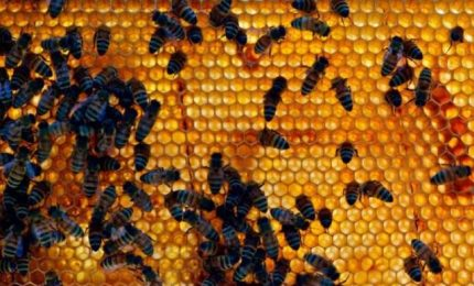 Angela Foti (Attiva Sicilia): subito aiuti per gli apicoltori siciliani