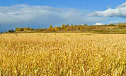 Valorizzazione dei grani antichi per garantire identità e valore delle produzioni: la scommessa del GAL Madonie