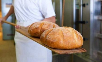 Cresce il prezzo del grano, attenzione all'aumento del prezzo del pane. L'invasione del pomodoro cinese sulle nostre tavole/ MATTINALE 483